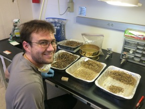 Lab Assistant Patrick sorting excavated woodrat midden sediments.