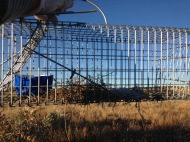 Kangaroo rat grass nest in a Tomahawk trap