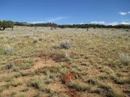 Flagging marking gopher mounds