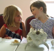 Learning about mammal teeth